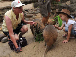 Kids can feed the animals in Taronga Zoo.