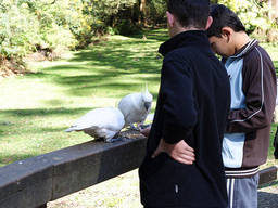 Bird feeding at the Dandenong Ranges National Park.