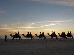 Spectacular sunset view and exciting camel tours in Cable Beach, Broome, WA.