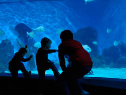 Your child will be captivated by the world that awaits them at an aquarium