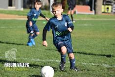 All Abilities Football (Soccer) Coburg North Soccer Clubs 4 _small