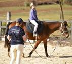 Hartwood Riding School