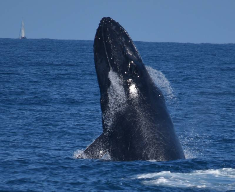 Mills Charters Whale Watching