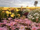 Bendigo Bed and Breakfast - Axedale